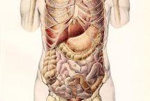 #Anatomy#Health