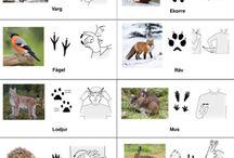 natur och djur