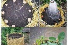 грядки, огород, контейнерное выращивание овощей и ягод