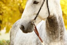 Koně - Horses - Pferde / fotky koní od profesionální fotografky koní Šárky Veinhauerové - www.fotosarka.cz
