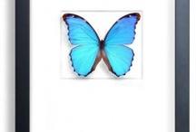 clubul de entomologie - suceava moldova romania - sectia ion nemes