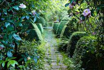 My future garden / gardening