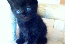 Souri Baby cat / My Baby cat