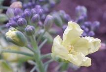 Blossoms, Flowers, Blooms / by Daniel Gasteiger