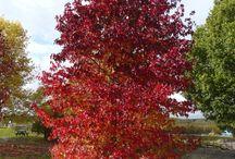 Prydbusker/trær