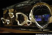 Florida Museum: Exhibits