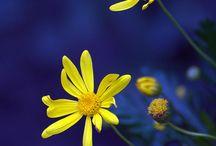 Azul & Amarelo