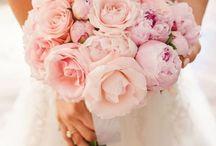 Wedding / Boda