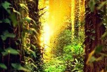 enchanting...