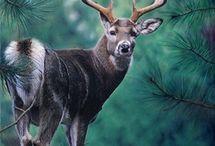 zwierzęta   leśne