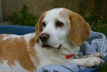 Spartacus / My dog