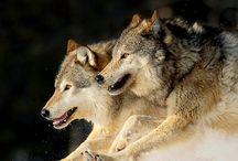 Wolves mural