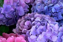 florais fotos
