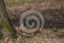 Animals on Dreamstime / All these photos can be bought full size and with no watermark -  Follow the link