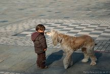 Human-Pet Bond
