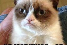 Grumpy cat! Lol.