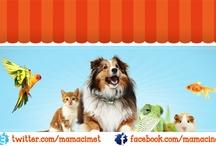Mamaci.net | Türkiye'nin En Net Evcil Hayvan Marketi