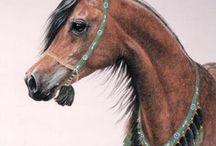 Horses / Polish horses