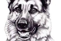 pes kresleni