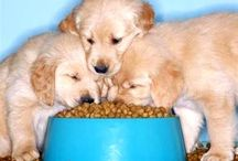 Pet and Cat Food ,Care