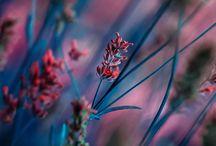 Яркие краски природы / Яркие и удивительные краски весны, лета, осени!