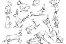 Animals-Rodent