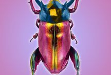 Bugs art