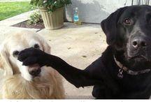 Komik köpekler