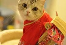Kimono Different