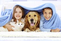 Pet Care / Its just not love, your pet needs adequate attention from you to maintain a good health.