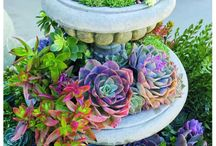 Succulents -- Oh so easy!