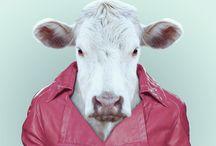 Animal Portrait Manipulation