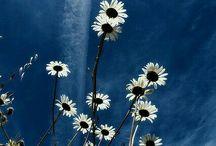 sevilen çiçekler...