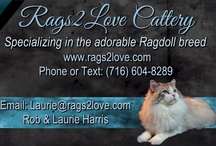 Rags2Love / by Rags2Love Cattery