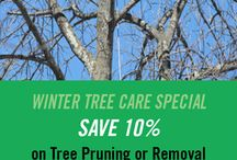 Tree Pruning/Removal Services