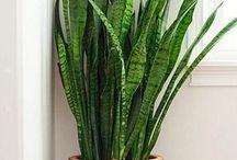 Planter som fins hos mæ