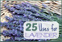 Lavender Love / by Jenn Crowell