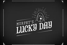 Murphy's Adventures / Our dog mascot, Murphy, is here to teach you about pet health insurance and to celebrate special events!