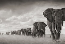 Wildlife / by Bert de Jong