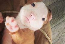 só cute!!!