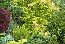 Örökzöldek - evergreen
