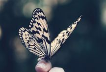 Butterflies / Butterflies the beautiful creatures that symbol lightness, freedom and growth.