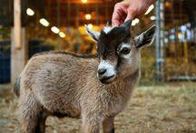 Hobby Farm / by Erica Tinker