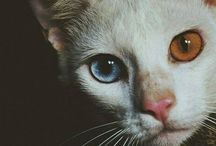 cats :3