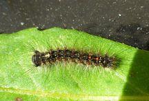 UConn Ladybug Blog / A new article every week!