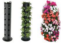 Flowers & planting ideas