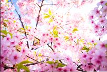 Art for Spring / Images of Spring from Gallery Direct / by Gallery Direct (Art + Design)