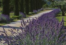 Provence / by Leann Holtsman Photography