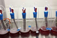 Algem Application Notes / Application Notes using our Algem Labscale Photobioreactor