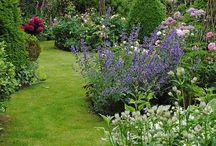 Gartenplanung / Pflanzen, die schön zusammen aussehen. Ideen der Gestaltung